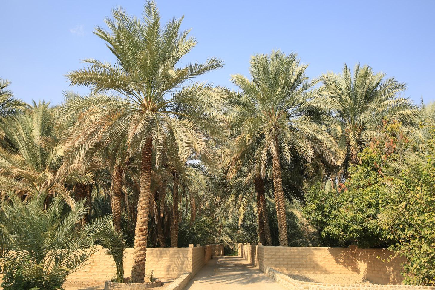 Al Ain: een prachtige oase