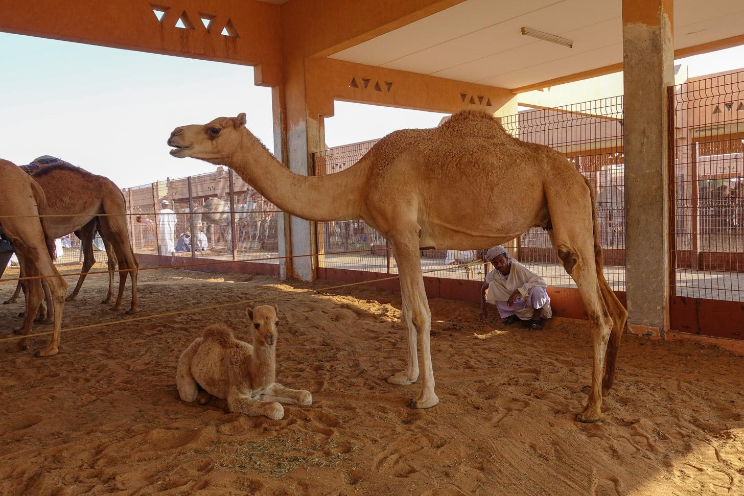 Kamelenmarkt